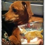 """""""Get Well, Willy!"""" - Willy poses with a Willy-cookie! :)"""